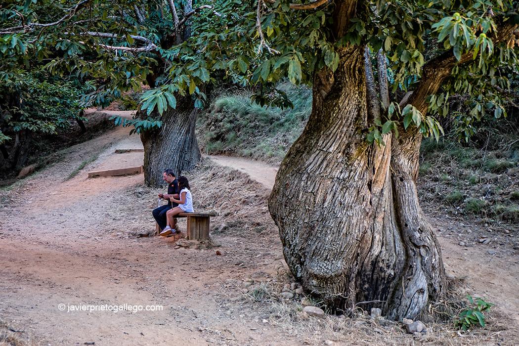 Viejos castaños entre los restos de la explotación minera romana de Las Médulas. Monumento Natural Las Médulas. El Bierzo. León. Castilla y León. España. © Javier Prieto Gallego;