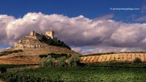 Viñedos. Castillo de Peñafiel. Ribera del Duero. Valladolid. Castilla y León. España © Javier Prieto Gallego;